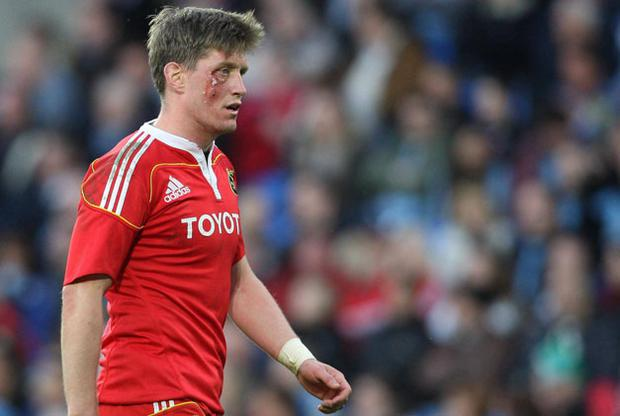 Ronan O'Gara has reached the veteran stage at 33 but is still vital to both Munster and Irish causes.