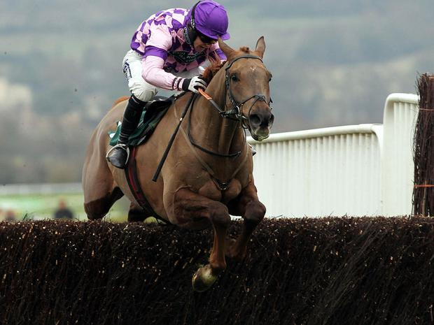 Time For Rupert: Gold Cup hopeful