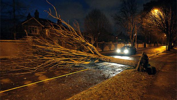 High winds brought down a tree on Shrewsbury Road in Dublin. Photo: Ray Cullen