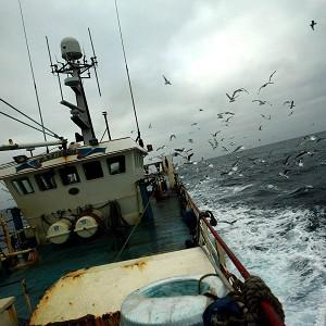 A fishing vessel has pulled up a suspected torpedo in its nets off the Ayrshire coast