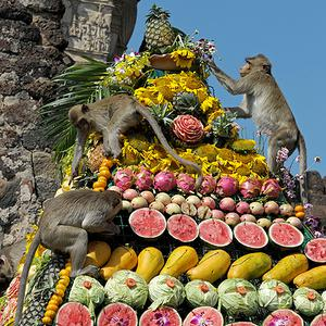 Monkeys eat fruit at an ancient temple during the annual 'monkey buffet' in Lopburi province, Thailand. More than 4,000 kilos of fruits and vegetables were offered to monkeys during the annual festival