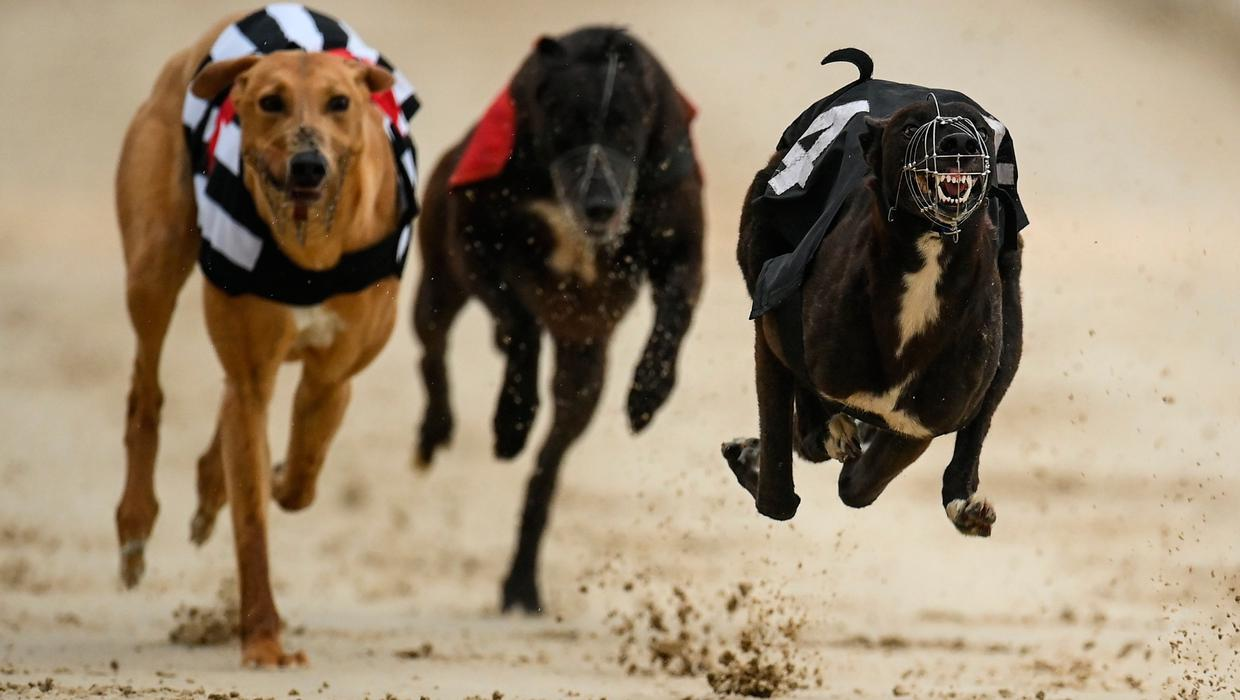 Greyhound industry launches fightback amid calls to cut State funding