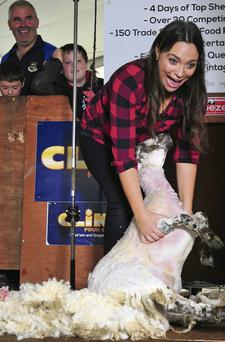 Independent.ie journalist Caitlin McBride shears a sheep for the first time at the National Ploughing Championships in Ratheniska, Stradbally, Co Laois