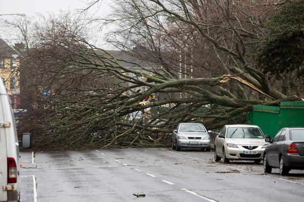 Mallow Street, Limerick was closed when a tree fell from the Peoples Park during storm Darwin. Photo: Sean Curtin