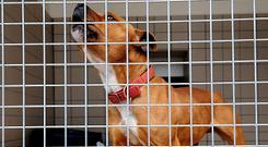 Animal shelters here, whose sole purpose is to find homes for dogs and cats, are using the term 'adoption' almost exclusively now (Stock picture)