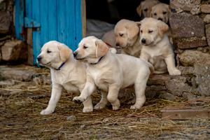 Puppies are not just for Christmas but they also offer an escape as they need a good walk. Photo: Dylan Vaughan