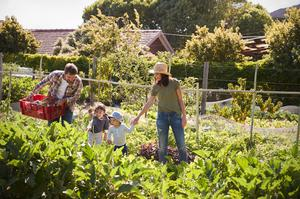Go green: Growing fruit, veg and herbs is one of the most life-enhancing, practical and enriching things you can ever do