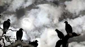 Vultures have 'unjustly been ascribed a ruthless streak' by humans. (Stock image)
