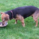 Would humans lick the plate clean if offered pet food?