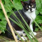 Cats like playing with plants, but can they eat them?