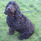 Sammy, an eight year old Black Cocker Spaniel, had problems eating