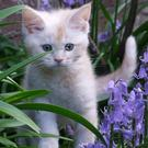 Kittens precisely match the definition of 'cuteness'
