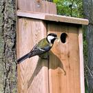 A Great Tit carrying food to its family in a nest box.