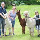 Matthew, Catherine and Lorcan Myles, Long Acre Alpacas, Glack, Ardee