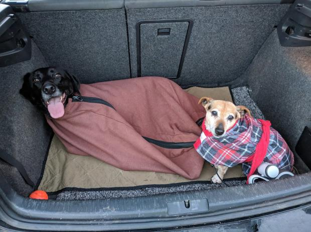 Pete's dogs: Finzi in her Doggy Bag and Kiko in her Dogrobe