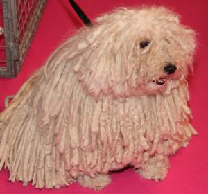 Dogs of all shapes and sizes take part in Crufts