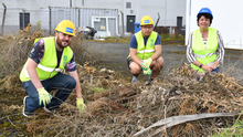 Catherine White, Jimmi Pang and Stephen Clarke, Dundalk Tidy Towns at the cleaning of the car park at the back of the Long Walk. Pictures: Ken Finegan/Newspics