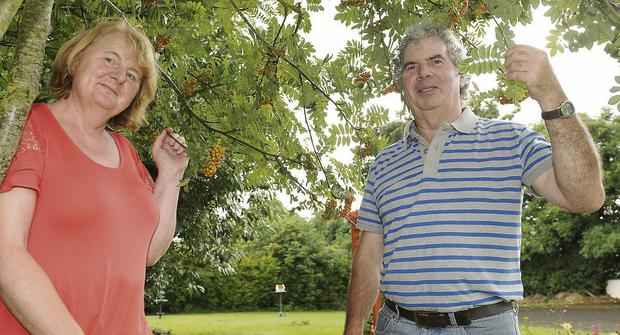 Benedicta McArdle and Seamus McArdle in the community garden at Dromiskin Credit Union.