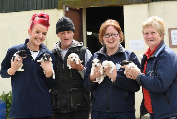 Puppy Power! The Louth Society for the Prevention of Cruelty to Animals (Louth SPCA) is just one of the local charities which has benefitted from the €1000 Tesco Community Fund.