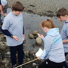 Pupils got a chance to learn about marine wildlife during the beach clean up