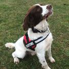Revenue detector dog Bill who sniffed out over €24,500 in cash