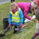Some of the younger volunteers planting Daffodil bulbs in the Carlingford Tidy Towns Guinness World Record attempt