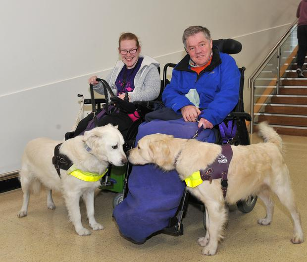 Nice to meet you: John Morgan with his new assistance dog 'Jamie' gets to meet Tracey Lee and her dog 'Derry'. Picture: Ken Finegan