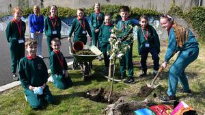 Miss Holland with Molly Devlin and Cillian Agnew and other members of the Student Council planting the fourth of their apple trees for Earth Day at Realt na Mara National School. Pictures: Ken Finegan / www.newspics.ie