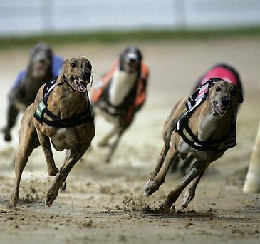 Greyhound fans plead: Don't sell Harold's Cross