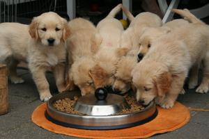 High priced pet food is often tastier and better quality