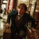 Eddie Redmayne as Newt Scamander in Fantastic Beasts and Where to Find Them
