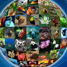 Friday, March 3 is World Wildlife Day