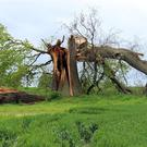 If you have damage to a large tree you may have to call in a professional tree surgeon.