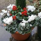 A winter pot