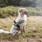 Harnesses are a kinder, better way of restraining dogs.