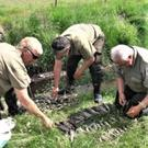 Assessing the number of young Brown Trout killed in a recent pollution incident in a stream