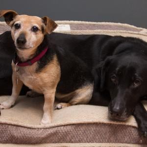 A memory foam bed is a popular sleeping place for pets