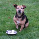Pets that spend time outdoors need to be wormed more often