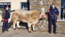 David Quinn of Carnew Mart with Owen O'Neill and the champion bullock