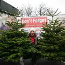 Siobhan Grant, Fundraising Manager Saint Joseph's Shankill, adding the final touches to the Christmas Tree sale
