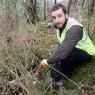 Vincent Coey cutting back the gorse on Bray Head with Coastcare on Saturday to help the young trees