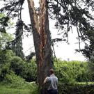 Tree hit by lightning and torn in half at Brennanstown Riding School on Monday morning