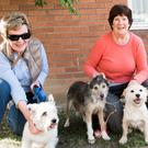 Annette Mulkern and Veronica Leederman with their dogs Sam, Jessie and Darcy