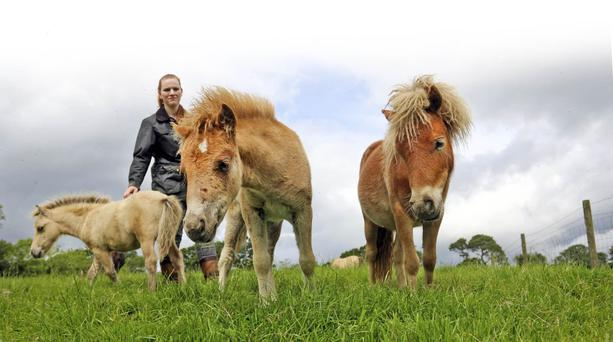Suzanne Acres with Flame and her two sister foals