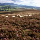 Wicklow Uplands Council carried out a detailed study of the whole uplands.