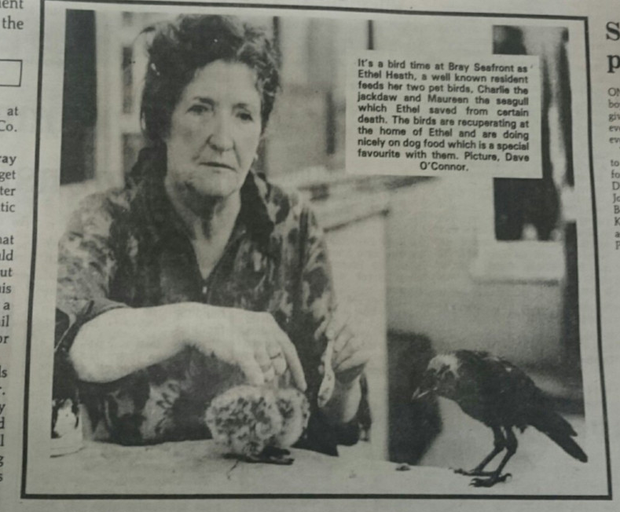 Ethel Heath, captured by photographer Dave O'Connor for the Bray People in 1983, with some of her pet birds.