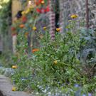 Planting and landscaping on the Albert Walk which has been developed by Bray Tidy Towns
