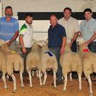 The Tullow Sheep Breeders' Association Cheviot category winners