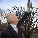 Stephen Collier places a leaf on the Purple House Tree of Remembrance at Colliers Funeral Directors in Bray.