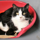 Hocus is looking for a forever home